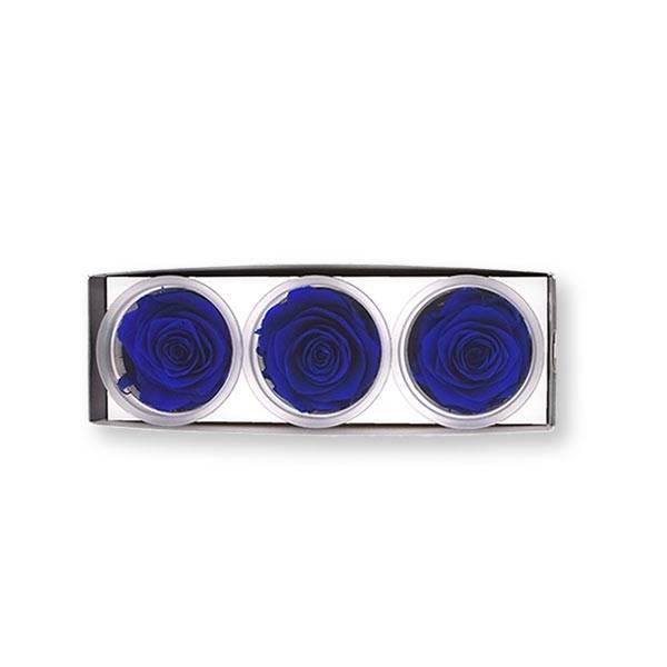 Rosen konserviert   dark blue   6cm   3er Pack