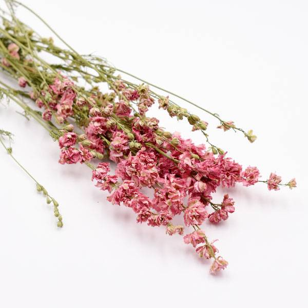 Love_dried_flowers_Trockenblumen_getrocknete_Blumen_Delphinium_Rittersporn_pink_5_stiele.jpg