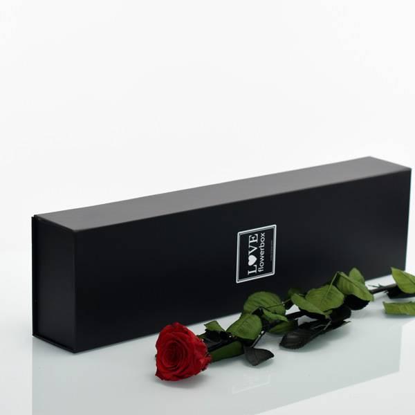 Flowerbox Lang | Classic | Rosen Burgundy (Bordeaux)