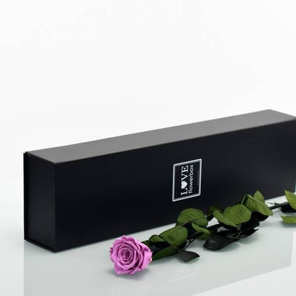 Flowerbox Lang | Classic | Rosen Mauve (Altrosa)