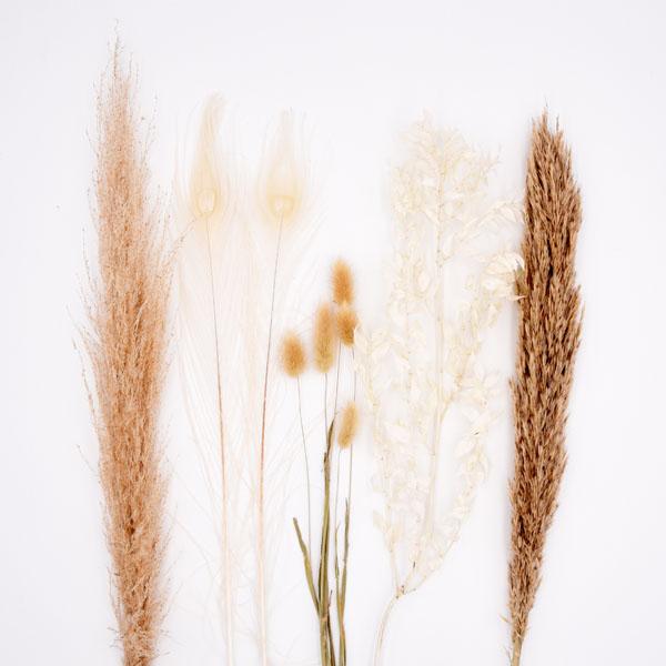 Trockenblumenstrauß Mix | Set Federleicht | Trockenblumen weiss-natur