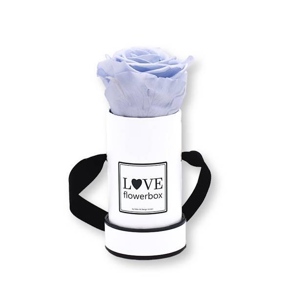 Flowerbox Modern | Mini | Rosen Cool Lavender (Flieder)