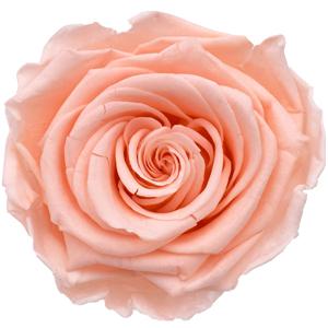 Pastellrosa (Porcelaine Pink)
