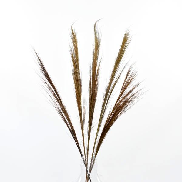 Trockenblumen Wild Reed, 5 Stiele