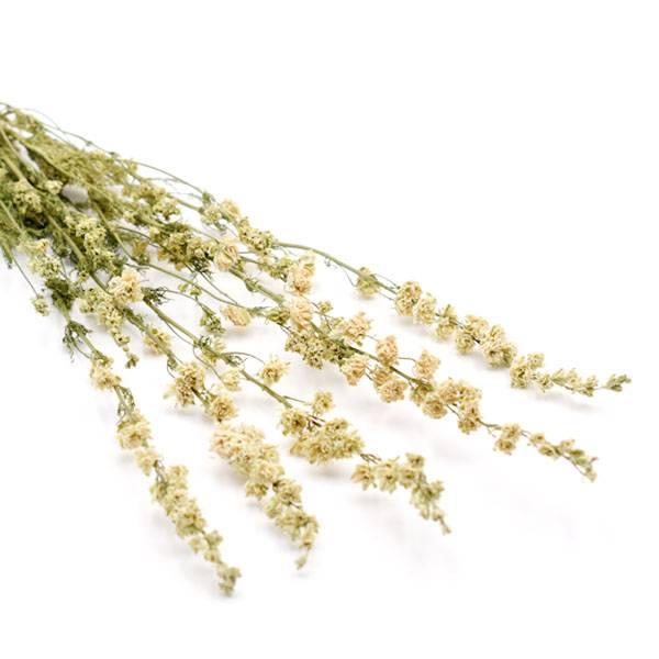Trockenblumen Delphinium (Rittersporn) kaufen getrocknet   Weiss   5 Stiele