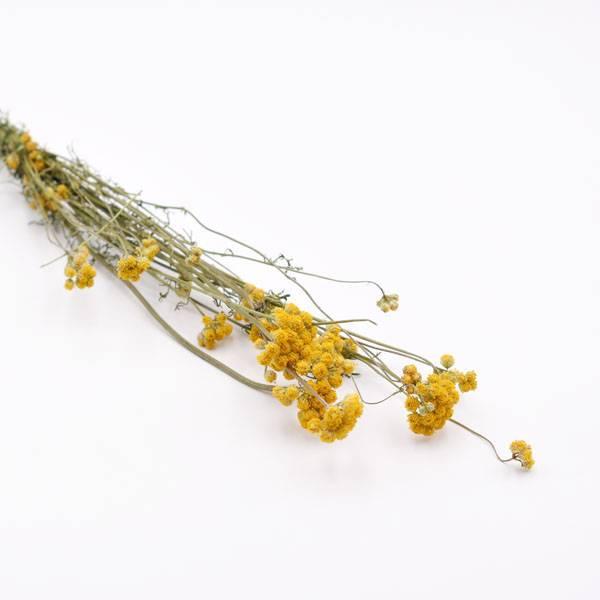 Love_dried_flowers_Trockenblumen_getrocknete_Blumen_Sanfordii_gelb.jpg